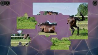 Puzzles for smart: Horses