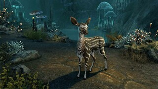 The Elder Scrolls Online  Бесплатный сброс параметров персонажа и питомец в подарок
