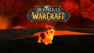 Игрок достиг 110 уровня в World of Warcraft на битвах питомцев